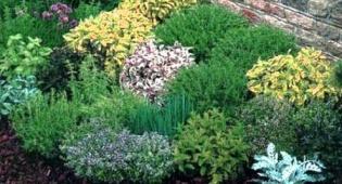 Vendita piante da frutto aromatiche perenni for Piante ornamentali perenni
